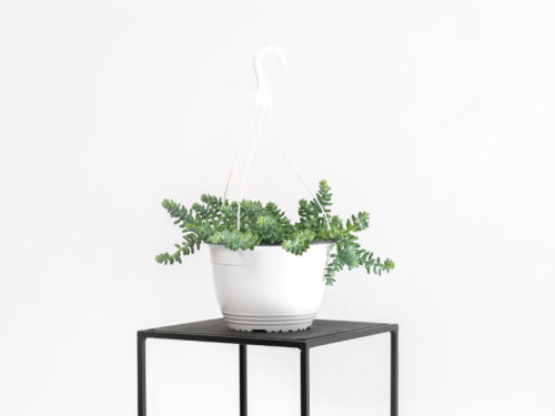 Opus Potted Plant